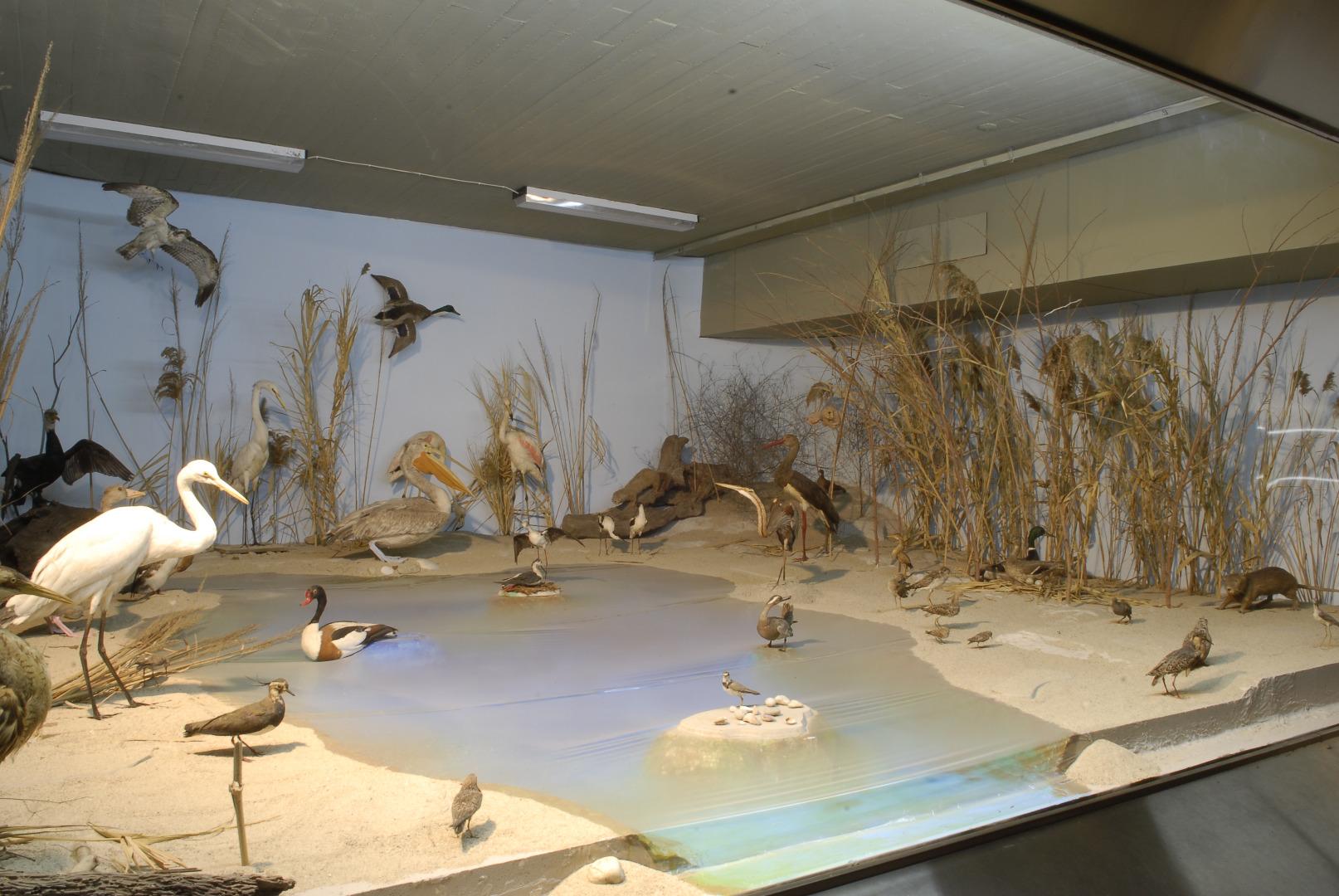 Αποτέλεσμα εικόνας για Αριστοτέλειο Μουσείο Φυσικής Ιστορίας Θεσσαλονίκη